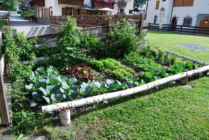VEGETABLE GARDEN OF MOUNTAIN