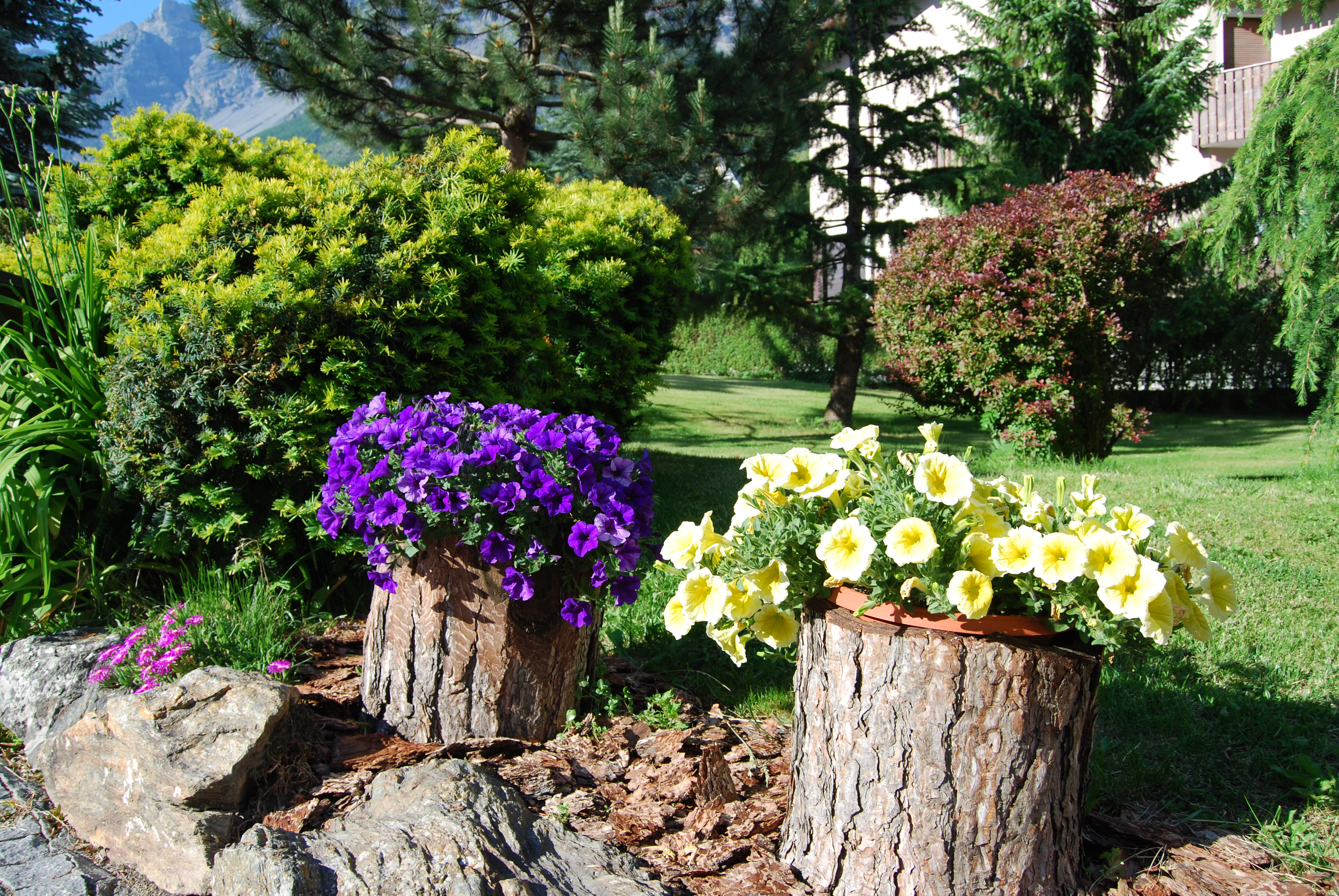 Fiori Da Giardino In Montagna giardino di montagna - chalet gardenia - residence