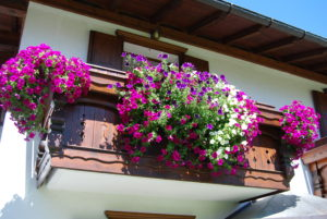 FLOWERED BALCONY  OF MOUNTAIN